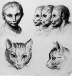 Animal to human evolution drawings - Cat