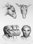 Animal to human evolution drawings