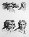 Animal to human evolution drawings - Eagle