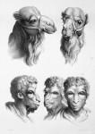 Animal to human evolution drawings - Camel