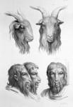 Animal to human evolution drawings -Goat